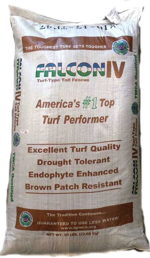 Falcon IV Turf Type Tall Fescue Photo